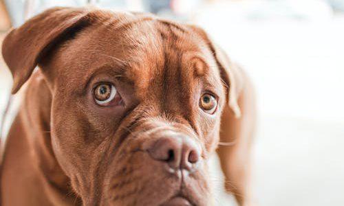 Handel in zieke pups